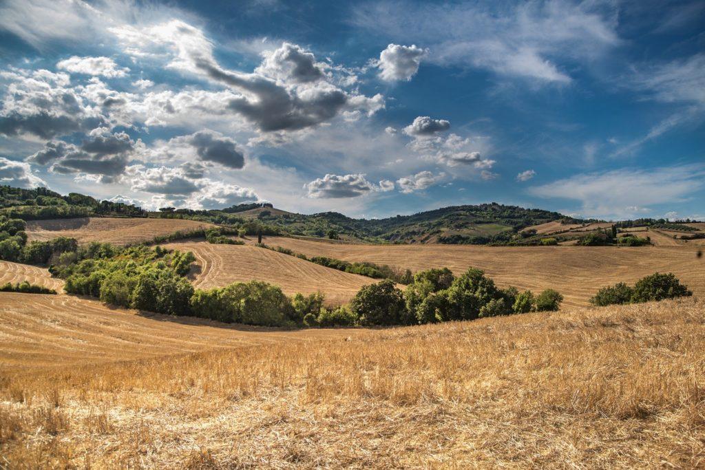 Wie stärken biobasierte Produkte ländliche Regionen? Bildquelle: Pixabay / Skitterphoto